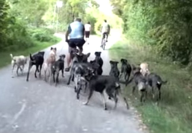 Como esse homem consegue controlar 16 cães de uma vez
