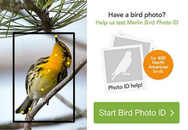 Site permite identificar espécie de pássaros apenas com uma foto
