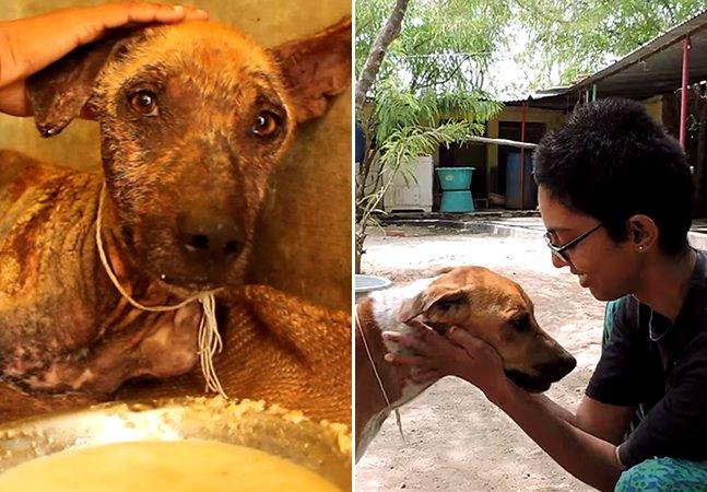 Organização cria vídeo emocionante sobre a transformação de um cão resgatado para incentivar a adoção