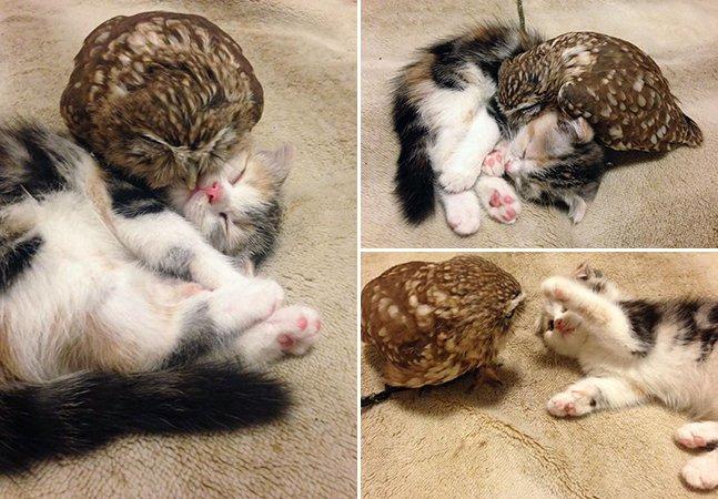 A improvável amizade entre um gatinho e uma coruja que vivem juntos num café japonês
