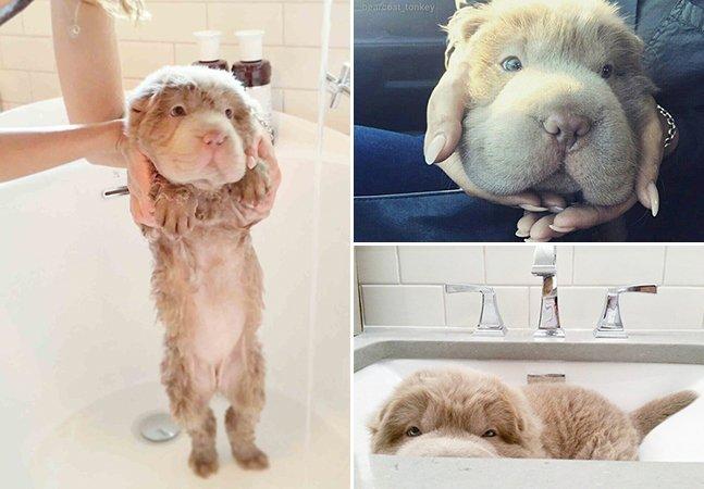 Filhote de cachorro que parece um urso faz sucesso na internet