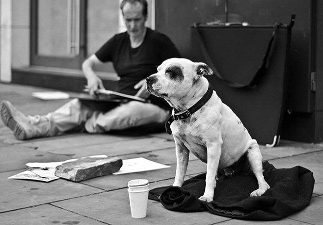 Como um cachorro ajudou seu dono  a deixar as ruas e o vício em drogas