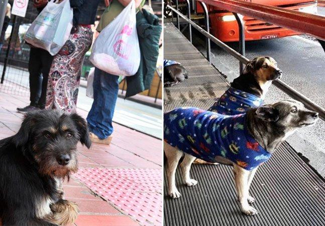 Em Curitiba, projeto permite a adoção comunitária de cães de rua