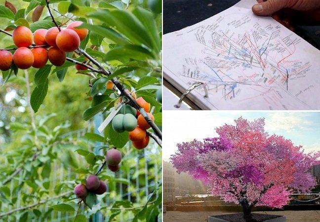 Artista cria árvore incrível capaz de dar 40 tipo diferentes de frutos
