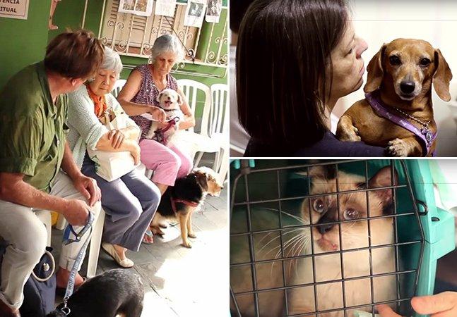 Centro espírita em SP atende mais de 2.500 animais por mês