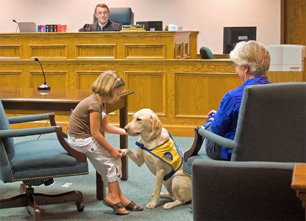 Courthouse-Dogs2