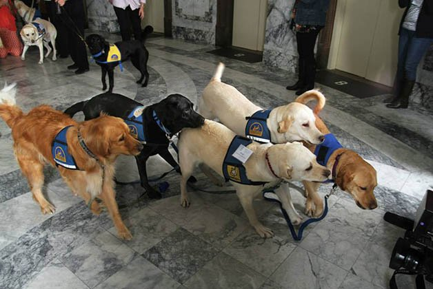 Courthouse-Dogs8
