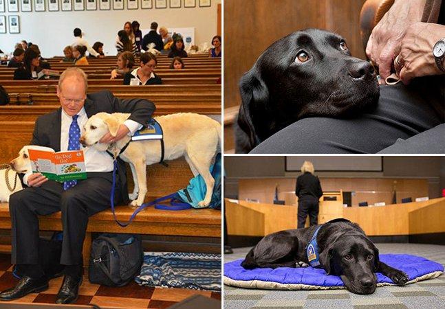 O trabalho dos cães que ajudam a acalmar vítimas nos tribunais