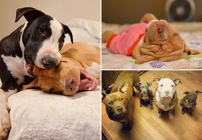 Conta no Instagram faz sucesso ao registrar o cotidiano de uma família de cachorros adotados