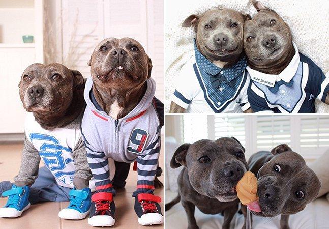Pitbulls são agressivos? Este par de irmãos caninos vai acabar com esse mito