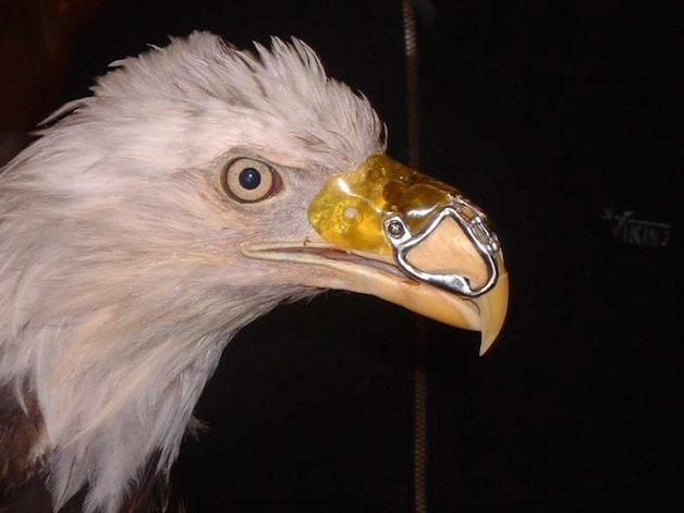 aguia1