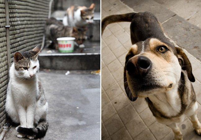 Em cidade da Espanha, lei garante a cães e gatos direitos semelhantes aos dos humanos