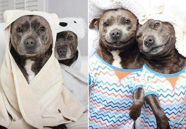 Esses inseparáveis cães fazem sucesso no instagram com suas fotos abraçados e usando pijamas