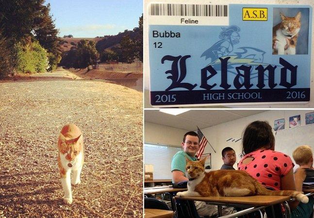 A história do gato que passava tanto tempo nessa escola que acabou virando aluno