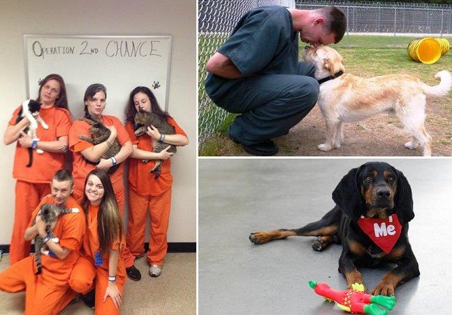 Programa permite que presos adestrem animais que seriam sacrificados por mau comportamento