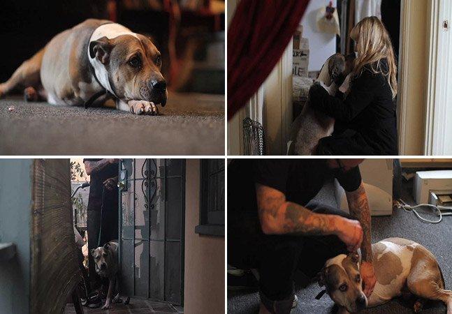 Mini documentário emocionante mostra os últimos momentos de um homem com seu cão