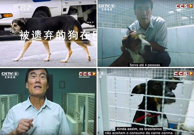 Ele está tentando importar cães de rua do Brasil para serem comidos na China