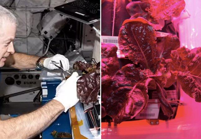 Alface plantado no espaço entra na dieta de astronautas da NASA