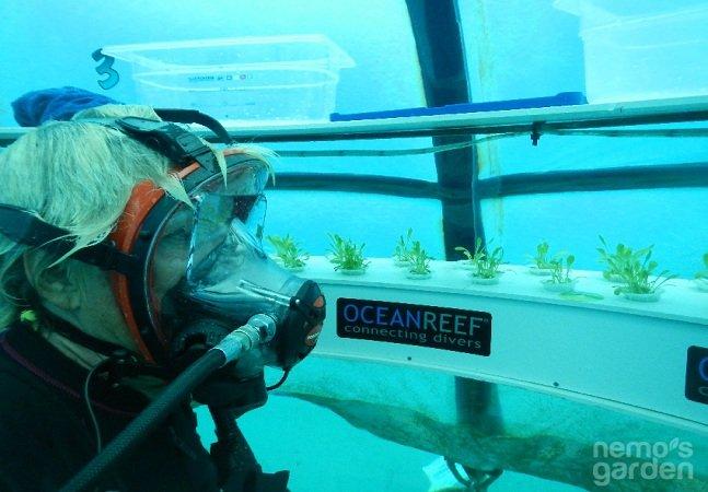 Conheça a empresa que está cultivando alimentos no fundo do mar