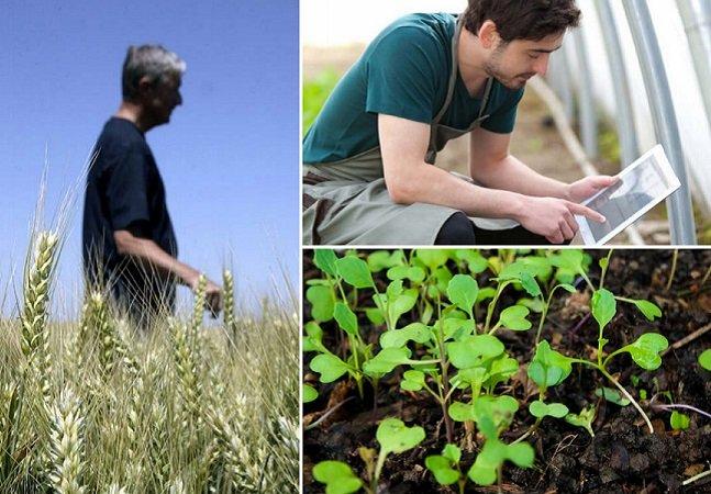 Dinamarca quer ser o primeiro país do mundo a somente permitir agricultura orgânica