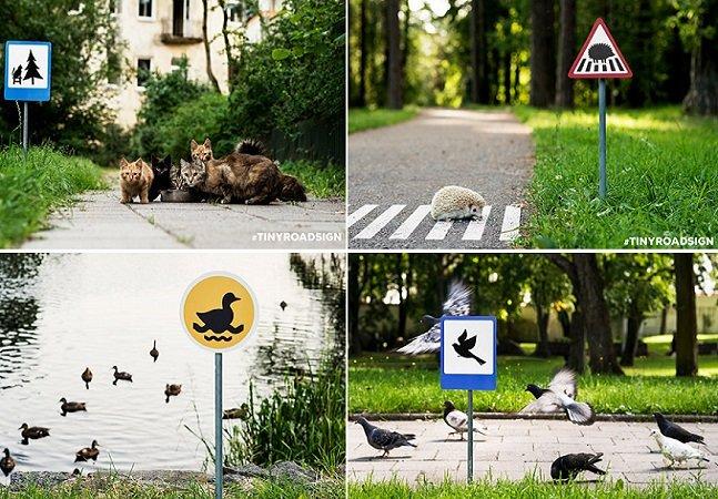 Campanha cria placas de trânsito em miniatura para incentivar respeito aos animais