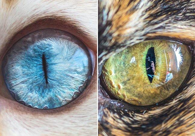 Fotógrafo usa lentes macro para captar a beleza dos olhos dos gatos