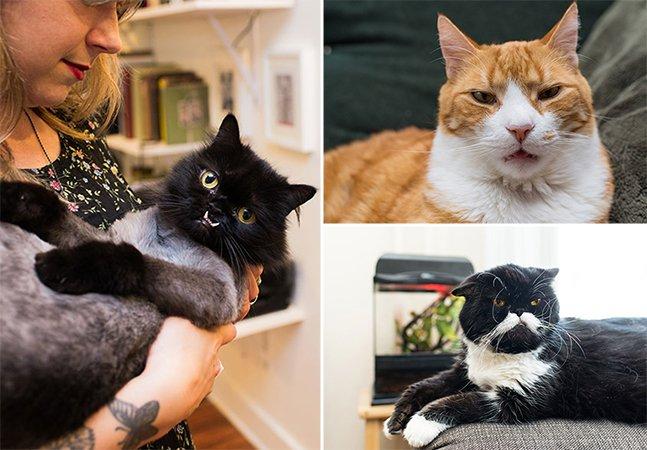 Casal viaja pelos Estados Unidos e Canadá para clicar os gatos mais famosos do Instagram