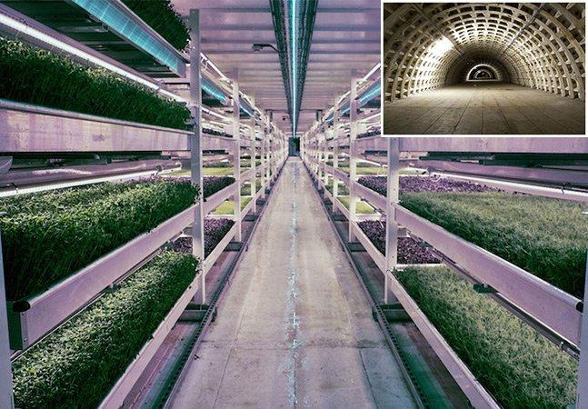 Antigo depósito de bombas da II Guerra Mundial vira fazenda hidropônica futurista