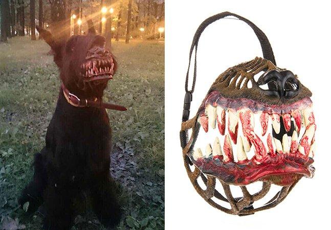 A focinheira criativa que transforma qualquer cachorro em lobisomem