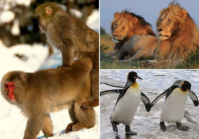 9 espécies de animais que praticam a homossexualidade
