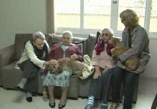 Cães idosos são adotados por residencial geriátrico em Joinville