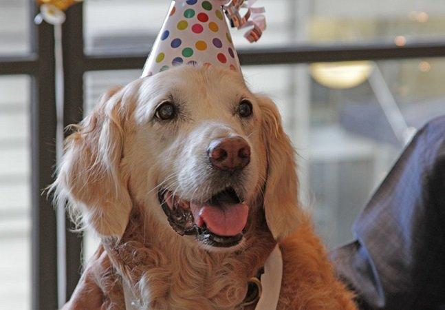Último cão vivo que trabalhou nos resgates do 11 de setembro ganha festa épica de aniversário