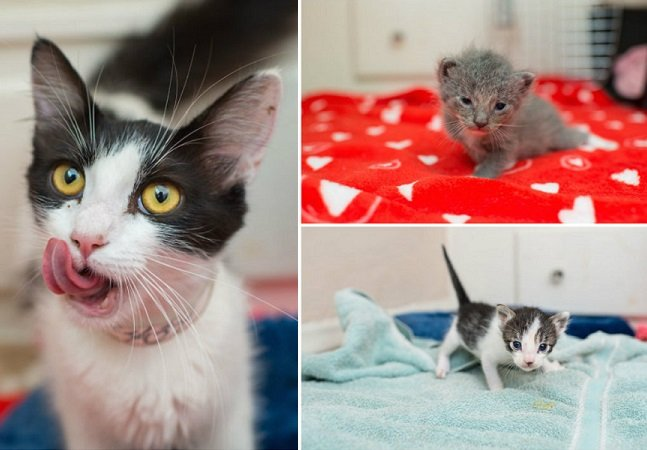 Para incentivar adoção, fotógrafa capta imagens encantadoras de sua gata e dos filhotes que ela deu à luz