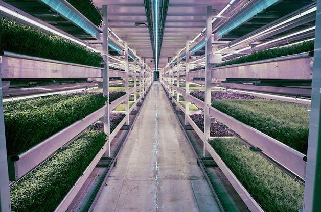 growingunderground1