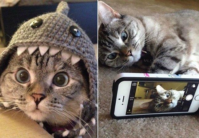 A história da gata mais famosa do Instagram que conta com mais de 2 milhões de seguidores