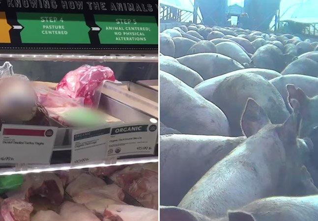 """Investigação mostra que muitos dos selos de """"bem-estar animal"""" em carnes são uma farsa"""