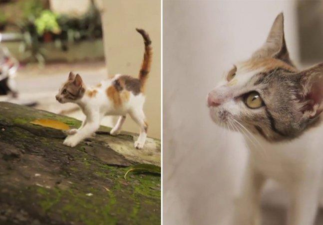 Vídeo emocionante de gatinha de 8 semanas prova que temos muito a aprender com os animais