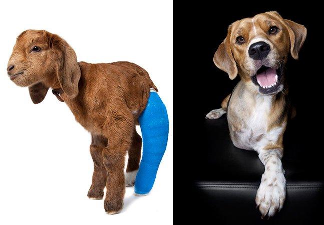 Série de fotos de animais com deficiência destaca a beleza das imperfeições