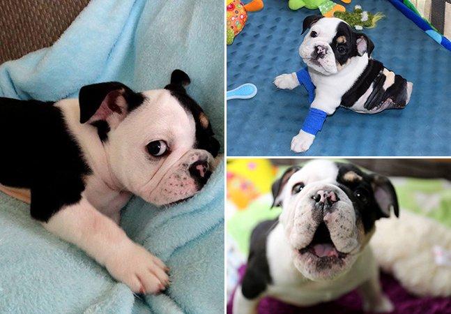 A história do cachorro que está servindo de inspiração ao superar suas dificuldades físicas