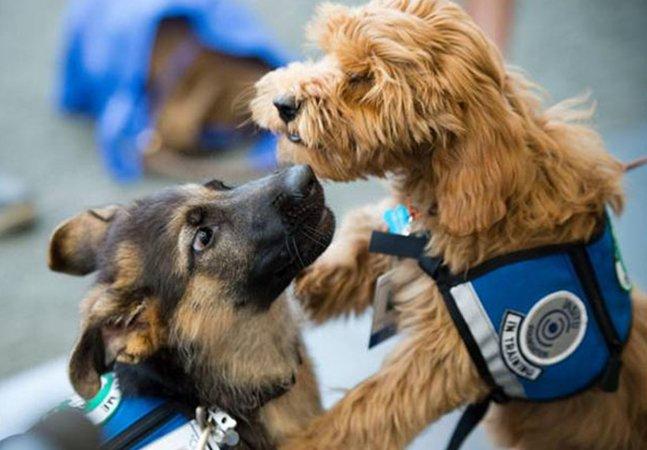 Como estes dois cãezinhos irão usar suas capacidades para salvar vidas humanas