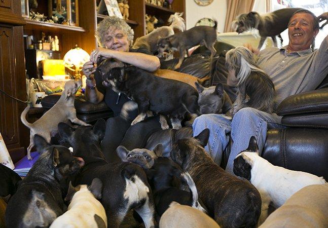 Casal conta como é viver com 41 cachorros em casa