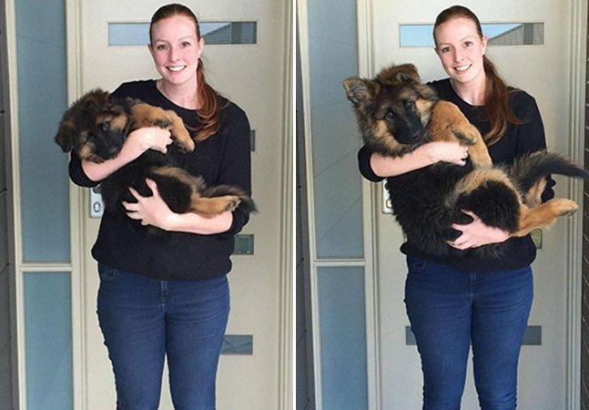 Casal fotografa seu cachorro ao longo de 8 meses para mostrar como eles crescem rápido