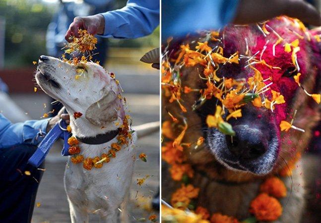 O famoso festival no Nepal que todos os anos agradece aos cachorros por serem nossos amigos