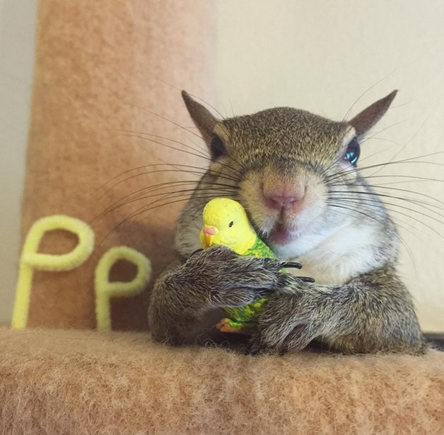 SquirrelJill1