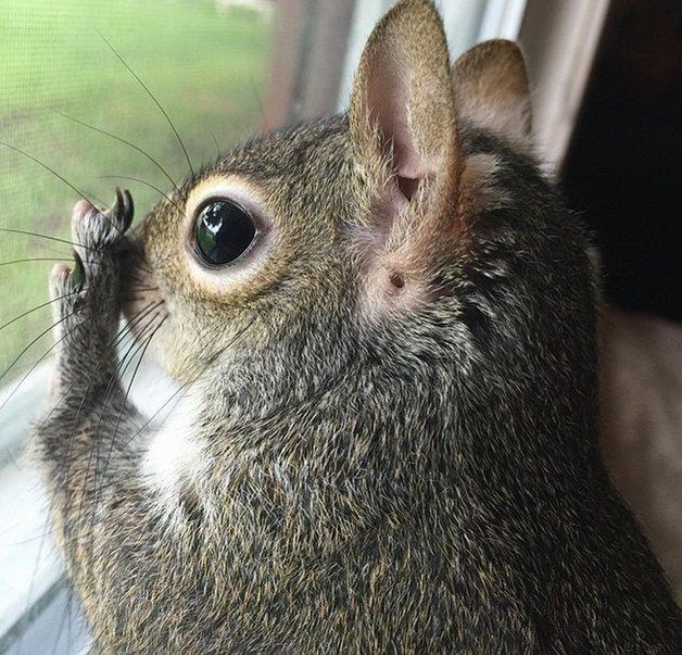 SquirrelJill10