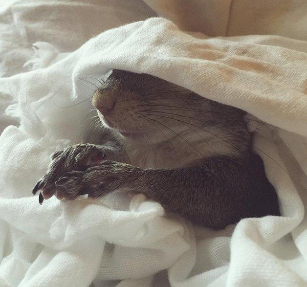 SquirrelJill11