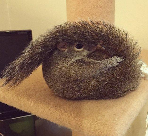 SquirrelJill2