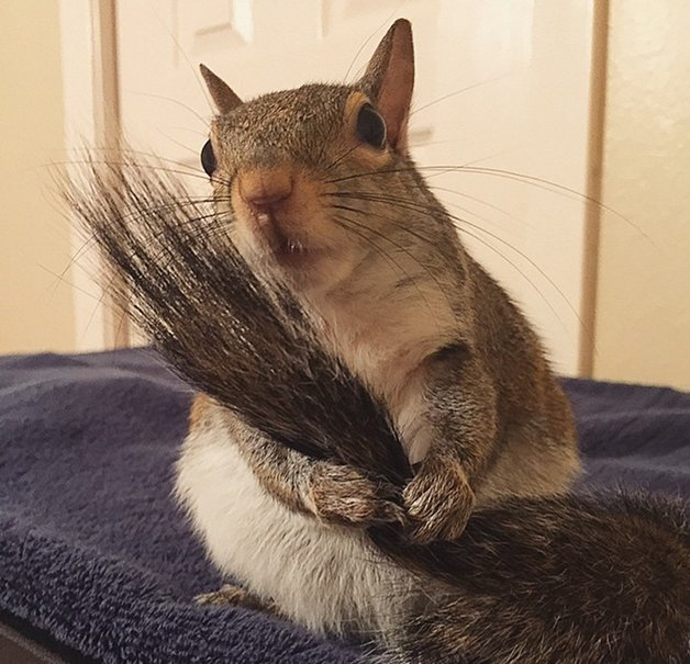 SquirrelJill5