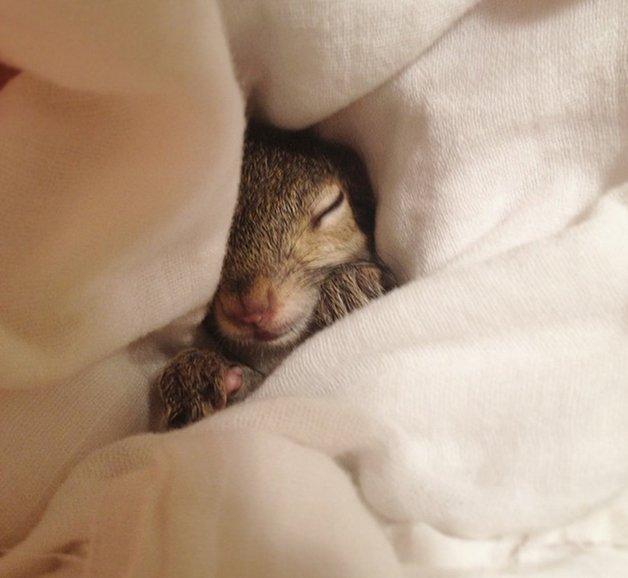 SquirrelJill6