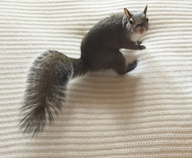 SquirrelJill7